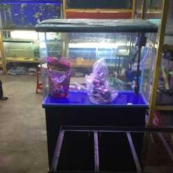 Rohit Aquarium