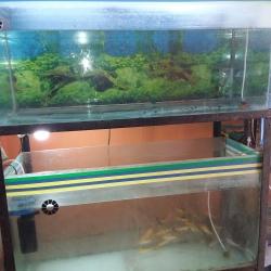 Amit Aquarium & Stamp House